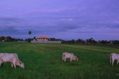 campo camboyano